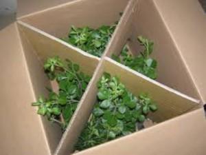 box1 (Small)